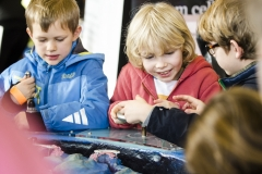 Brighton Science Festival Bright Sparks Sunday, Hove Park School, Sun 14 February, 10:00am-5:00pm