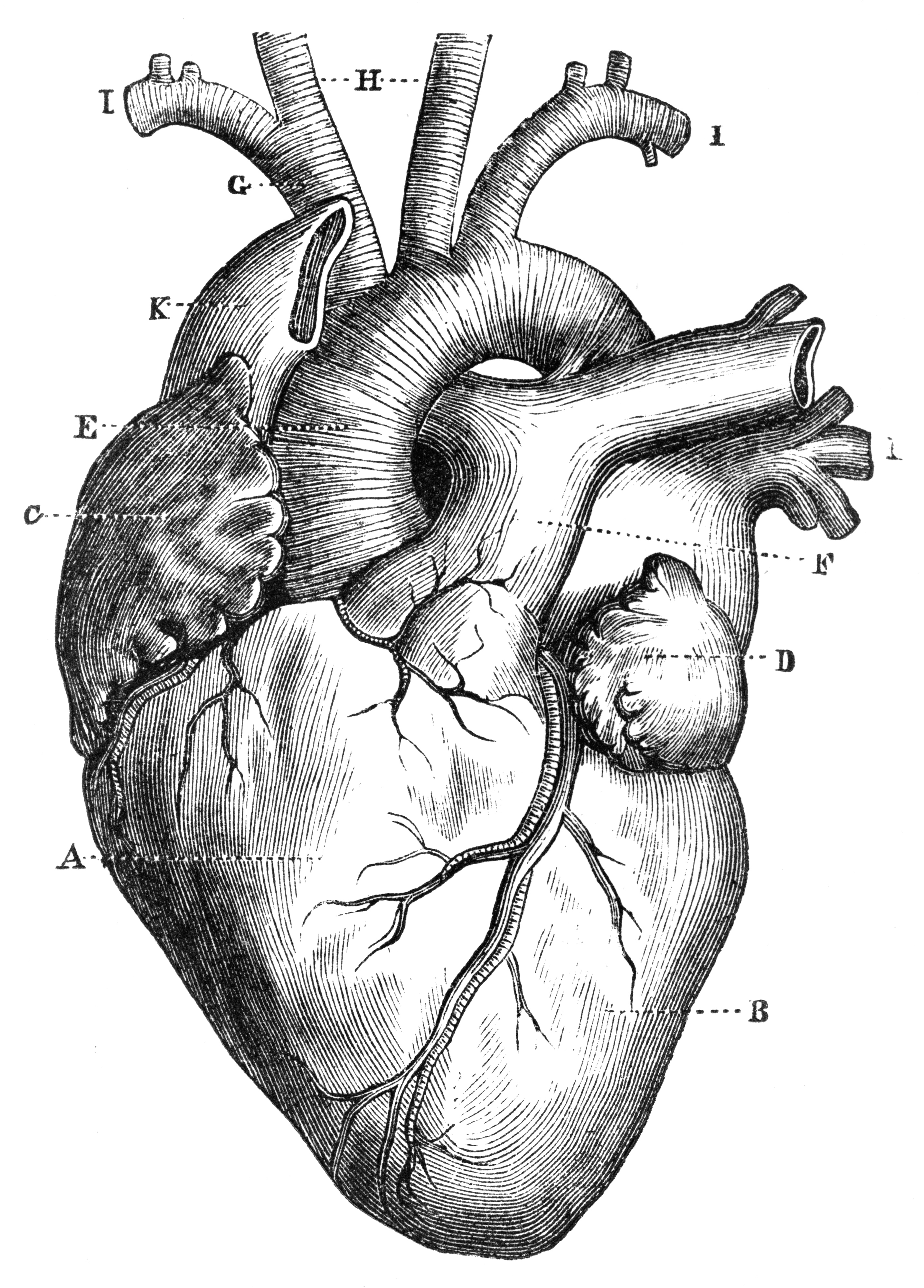 Anatomy Night Matters Of The Heart Brighton Science Festival